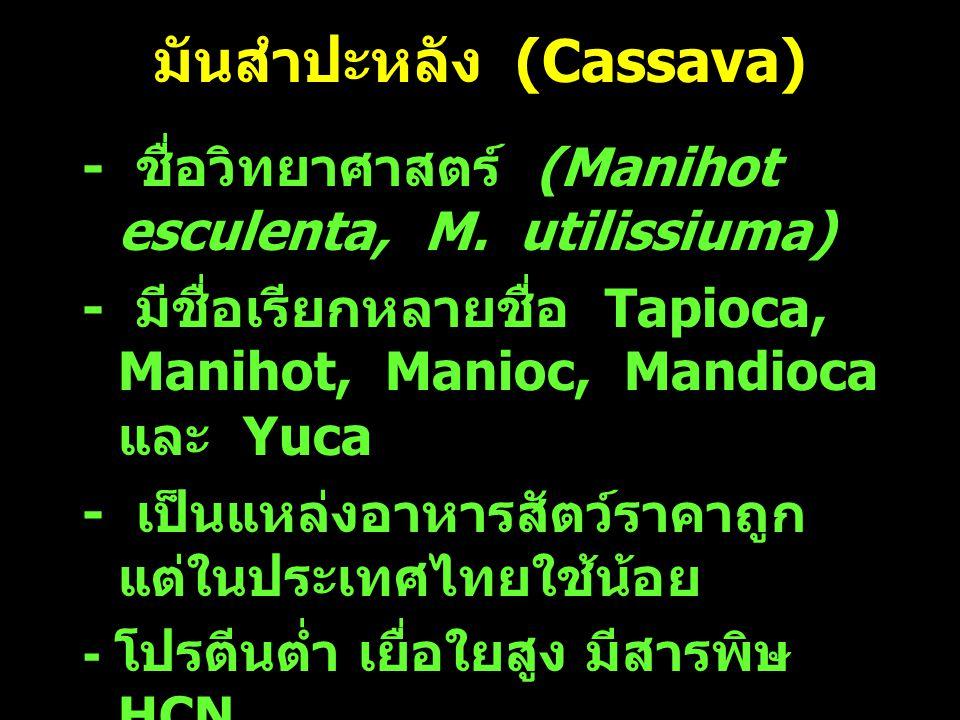 มันสำปะหลัง (Cassava) - ชื่อวิทยาศาสตร์ (Manihot esculenta, M. utilissiuma) - มีชื่อเรียกหลายชื่อ Tapioca, Manihot, Manioc, Mandioca และ Yuca - เป็นแห