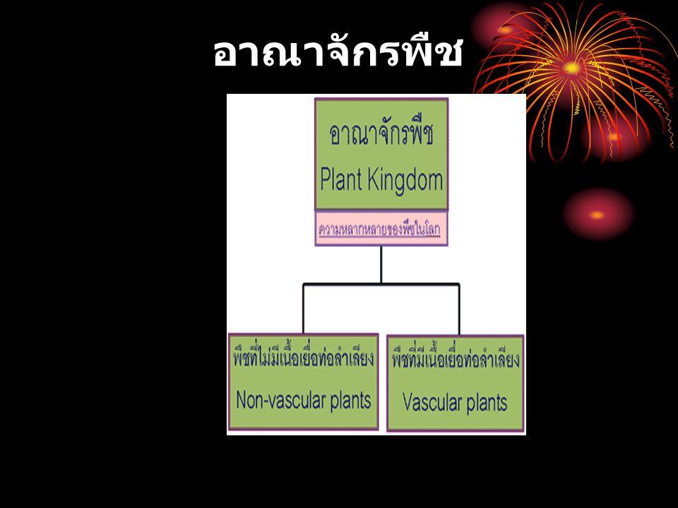 พืชไม่มีเนื้อเยื้อลำเลียง พืชไม่มีเนื้อเยื่อท่อลำเลียง (Non-vascular plants) พืชกลุ่มนี้ได้แก่ไบรโอไฟต์ (bryophytes) พืชสีเขียวขนาดเล็กพบบริเวณที่ร่มและชื้น gametophyte เด่นในวงจรชีวิต ซึ่งเป็นพืชที่พบทั่ว ๆ ไป การปฏิสนธิยังจำเป็นต้องอาศัยน้ำเป็นตัวกลาง ( สเปิร์ม จะว่ายน้ำเข้าไปผสมกับไข่ ภายในอับเซลล์สืบพันธุ์เพศเมีย ) เช่นเดียวกับใน สาหร่ายสีเขียว แต่แตกต่างที่จาก ไซโกต (2n) จะเจริญเป็นเอมบริโอ ก่อนที่จะเป็น sporophyte sporophyte มีช่วงชีวิตสั้นและจะต้องอาศัยอยู่บน gametophyte ตลอดชีวิต ความหลากหลายของไบรโอไฟต์ Bryophytes Link: ไบรโอไฟต์ในประเทศไทย เกี่ยวกับไบรโอไฟต์ในแง่มุมต่างๆ