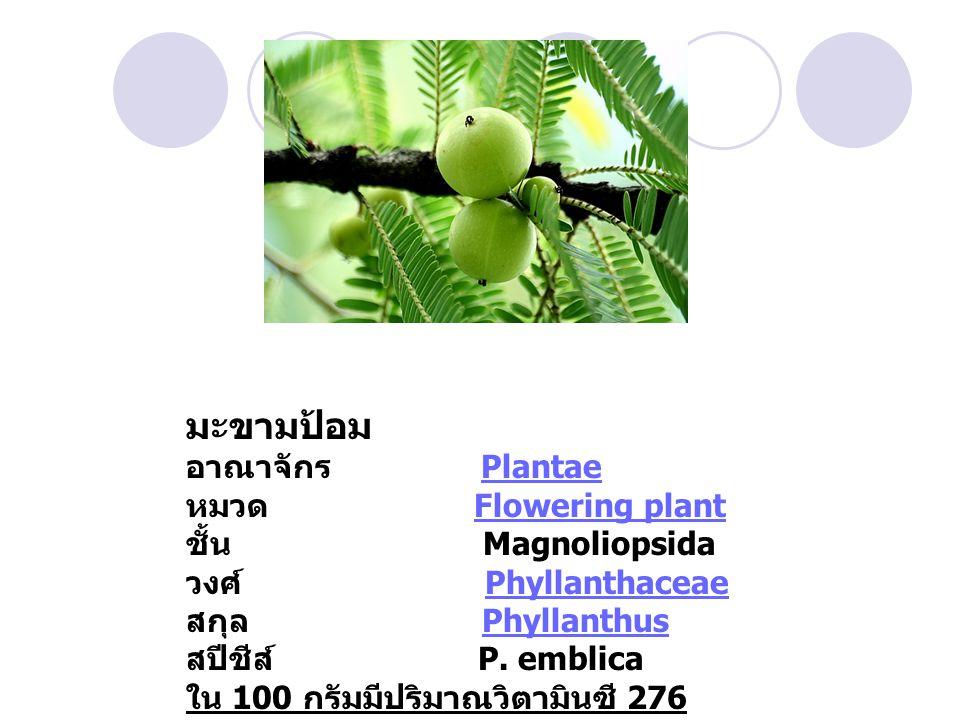 มะขามป้อม อาณาจักร Plantae Plantae หมวด Flowering plantFlowering plant ชั้น Magnoliopsida วงศ์ PhyllanthaceaePhyllanthaceae สกุล PhyllanthusPhyllanthus สปีชีส์ P.