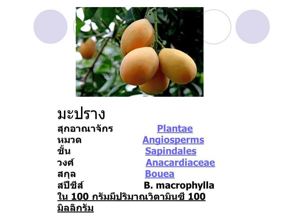มะปราง สุกอาณาจักร Plantae หมวด Angiosperms ชั้น Sapindales วงศ์ Anacardiaceae สกุล Bouea สปีชีส์ B.