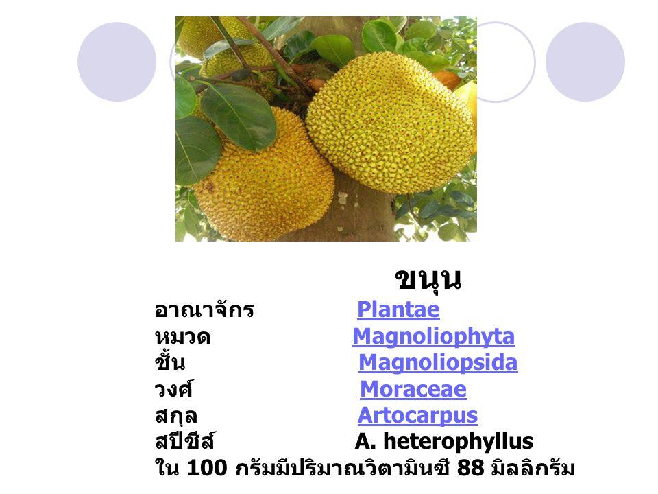 มะละกอ สุก อาณาจักร PlantaePlantae หมวด MagnoliophytaMagnoliophyta ชั้น MagnoliopsidaMagnoliopsida วงศ์ CaricaceaeCaricaceae สกุล Carica สปีชีส์ C.