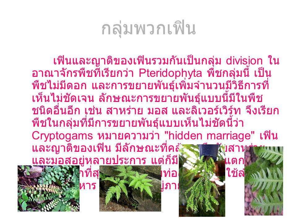 กลุ่มพวกเฟิน เฟินและญาติของเฟินรวมกันเป็นกลุ่ม division ใน อาณาจักรพืชทีเรียกว่า Pteridophyta พืชกลุ่มนี้ เป็น พืชไม่มีดอก และการขยายพันธุ์เพิ่มจำนวนม