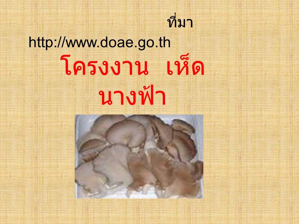 ที่มา http://www.doae.go.th โครงงาน เห็ด นางฟ้า