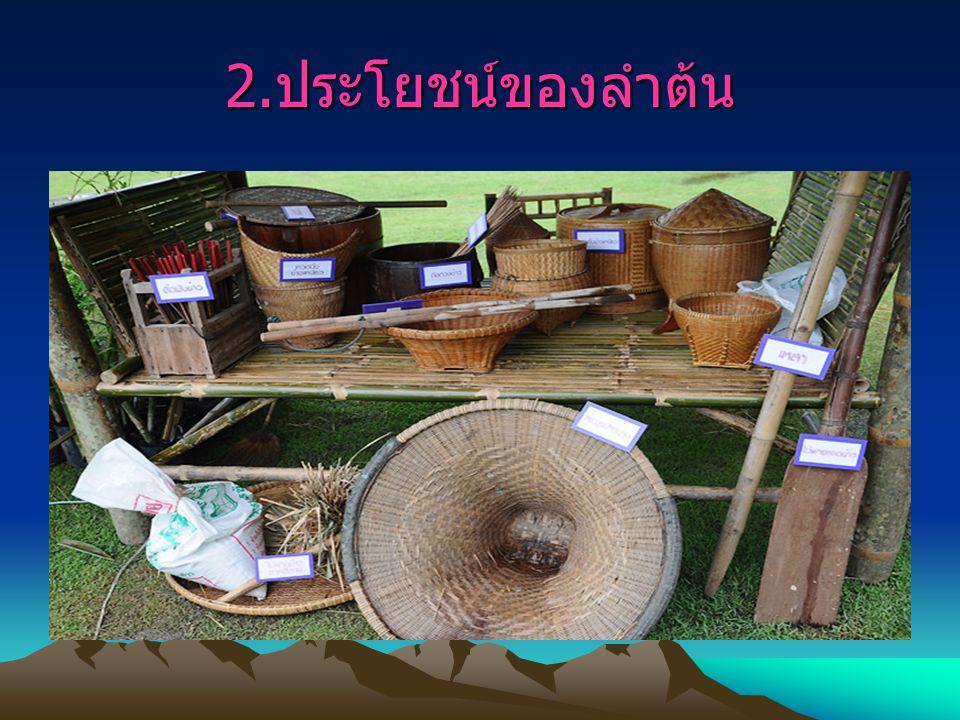 3. ประโยชน์ของหน่อไม้