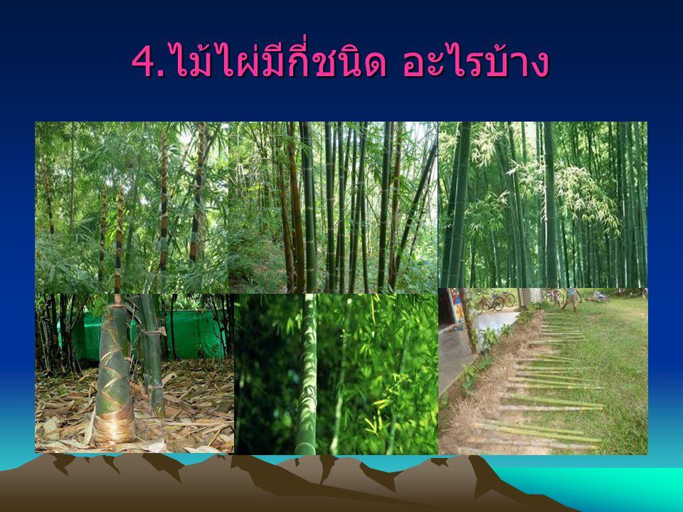 5. ไม้ไผ่กับวัฒนธรรมไทย