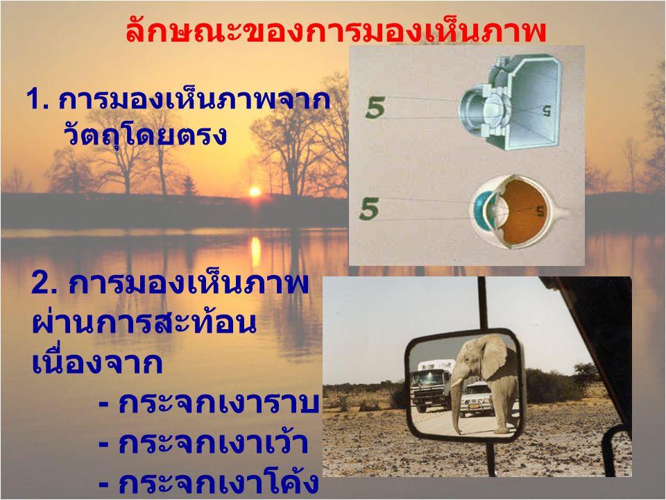 ลักษณะของการมองเห็นภาพ 1. การมองเห็นภาพจาก วัตถุโดยตรง 2. การมองเห็นภาพ ผ่านการสะท้อน เนื่องจาก - กระจกเงาราบ - กระจกเงาเว้า - กระจกเงาโค้ง