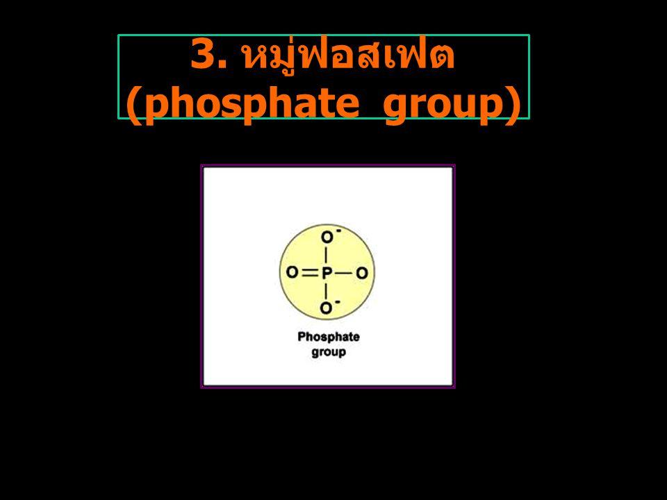 3. หมู่ฟอสเฟต (phosphate group)