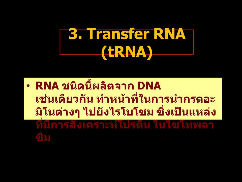 3. Transfer RNA (tRNA) RNA ชนิดนี้ผลิตจาก DNA เช่นเดียวกัน ทำหน้าที่ในการนำกรดอะ มิโนต่างๆ ไปยังไรโบโซม ซึ่งเป็นแหล่ง ที่มีการสังเคราะห์โปรตีน ในไซโทพ