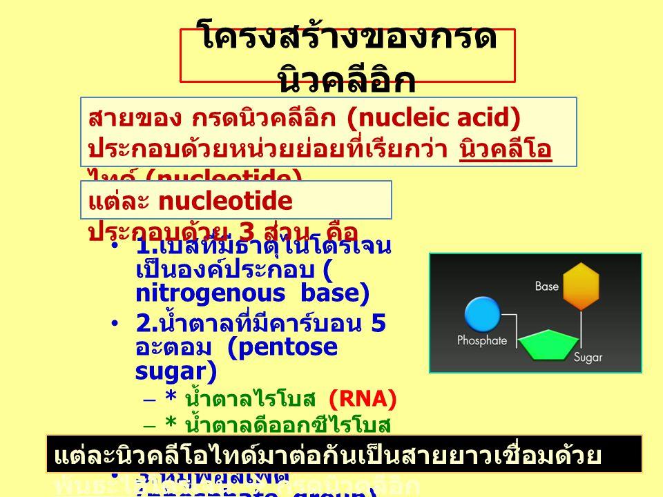 โครงสร้างของกรด นิวคลีอิก 1. เบสที่มีธาตุไนโตรเจน เป็นองค์ประกอบ ( nitrogenous base) 2. น้ำตาลที่มีคาร์บอน 5 อะตอม (pentose sugar) –* น้ำตาลไรโบส (RNA