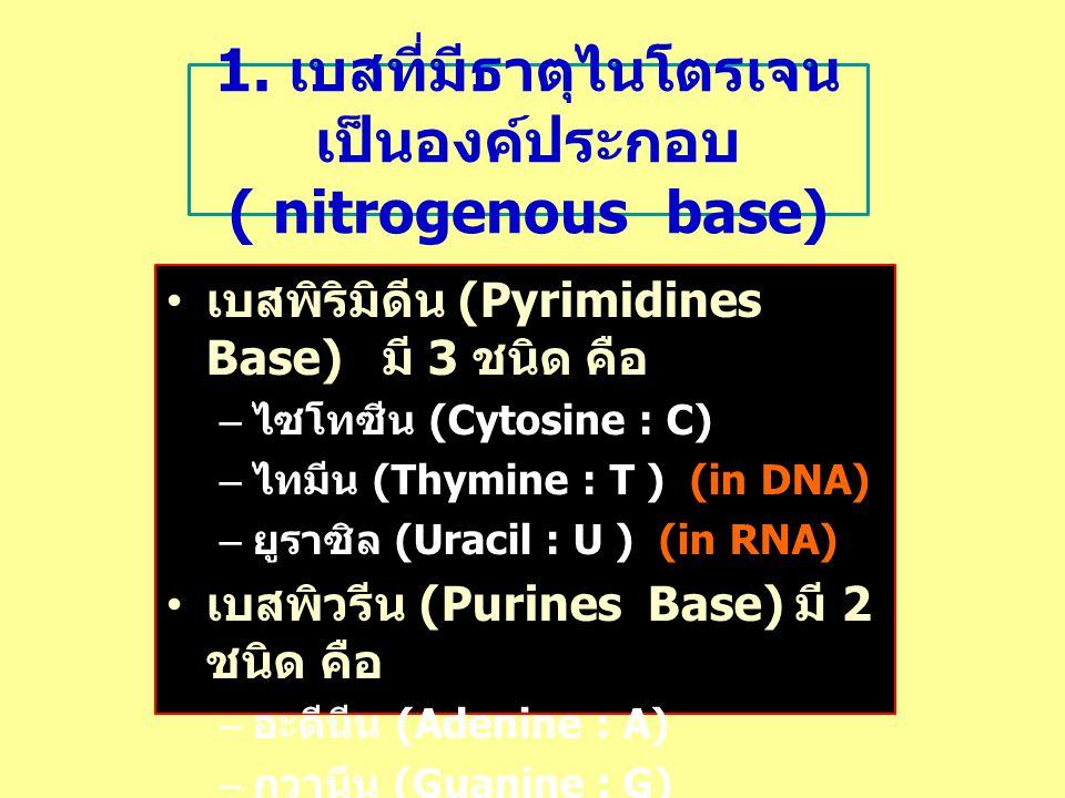1. เบสที่มีธาตุไนโตรเจน เป็นองค์ประกอบ ( nitrogenous base) เบสพิริมิดีน (Pyrimidines Base) มี 3 ชนิด คือ – ไซโทซีน (Cytosine : C) – ไทมีน (Thymine : T