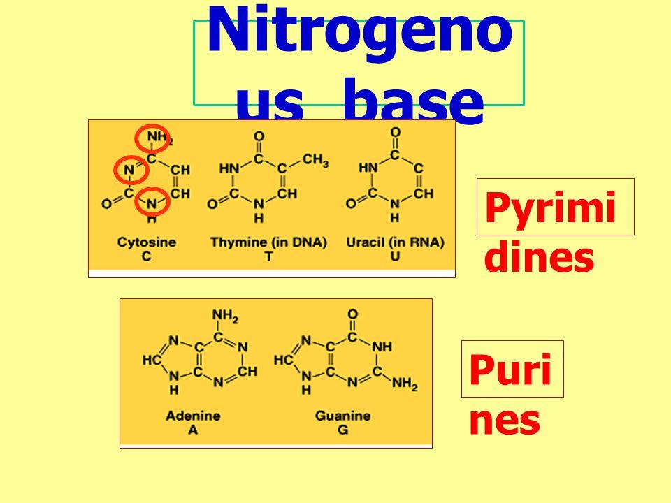 Nitrogeno us base Pyrimi dines Puri nes