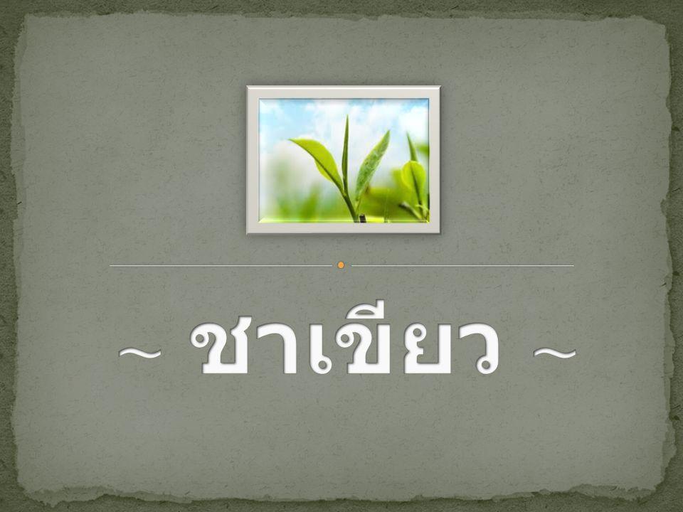 ชาเขียว ( ญี่ปุ่น : 緑茶 ryokucha ), จีน : 绿茶 - พิน อิน : l ǜ chá), ( อังกฤษ : green tea) เป็นชาที่เก็บเกี่ยวจาก พืชในชนิด Camellia sinensis ( เช่นเดียวกับ ชา ขาว ชาดำ และชาอู่หลง ชา ที่ไม่ผ่านการหมัก ซึ่งมี ประโยชน์ต่อสุขภาพและมี คุณสมบัติในการต้านทาน โรคได้นานาชนิดจึงเป็นที่ นิยมของคนส่วนใหญ่ น้ำชา จะเป็นสีเขียวหรือเหลืองอม เขียว มีรสฝาดไม่มีกลิ่น แต่ จะมีการแต่งกลิ่นเผื่อให้เกิด ความน่ารับประทานมากขึ้น.