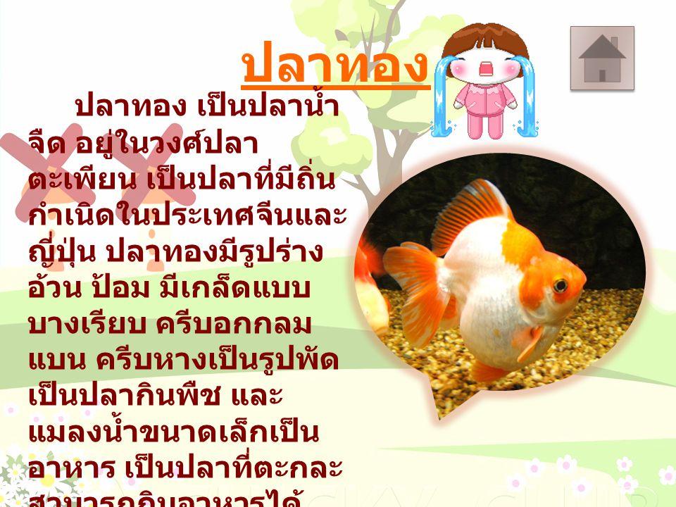 ปลาทอง ปลาทอง เป็นปลาน้ำ จืด อยู่ในวงศ์ปลา ตะเพียน เป็นปลาที่มีถิ่น กำเนิดในประเทศจีนและ ญี่ปุ่น ปลาทองมีรูปร่าง อ้วน ป้อม มีเกล็ดแบบ บางเรียบ ครีบอกก