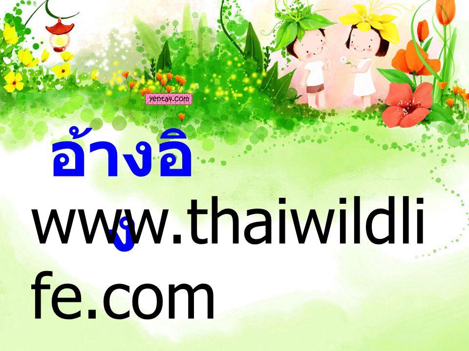 อ้างอิ ง www.thaiwildli fe.com