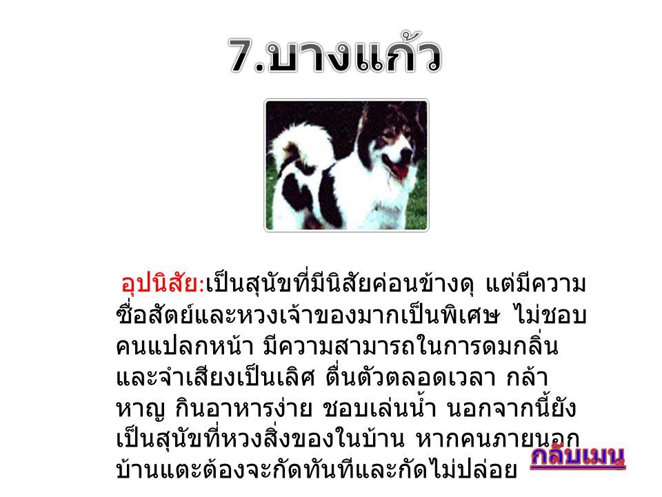 อุปนิสัย : เป็นสุนัขที่มีนิสัยค่อนข้างดุ แต่มีความ ซื่อสัตย์และหวงเจ้าของมากเป็นพิเศษ ไม่ชอบ คนแปลกหน้า มีความสามารถในการดมกลิ่น และจำเสียงเป็นเลิศ ตื