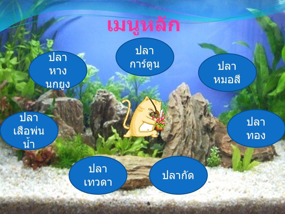 เมนูหลัก ปลา หาง นกยูง ปลา หมอสี ปลา ทอง ปลากัด ปลา การ์ตูน ปลา เสือพ่น น้ำ ปลา เทวดา