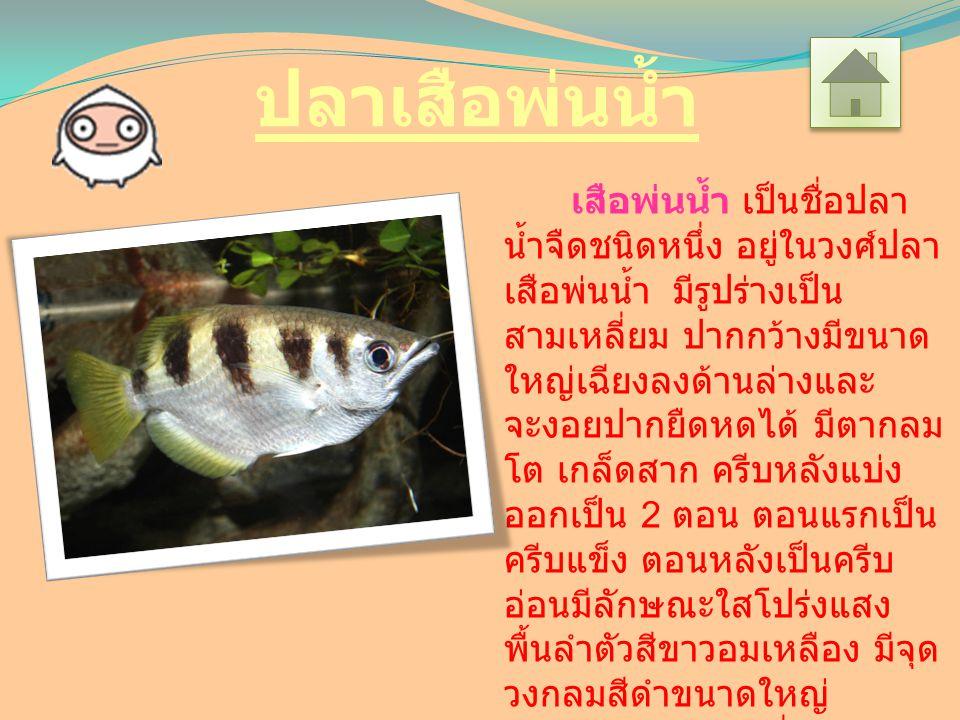 ปลาเสือพ่นน้ำ เสือพ่นน้ำ เป็นชื่อปลา น้ำจืดชนิดหนึ่ง อยู่ในวงศ์ปลา เสือพ่นน้ำ มีรูปร่างเป็น สามเหลี่ยม ปากกว้างมีขนาด ใหญ่เฉียงลงด้านล่างและ จะงอยปากยืดหดได้ มีตากลม โต เกล็ดสาก ครีบหลังแบ่ง ออกเป็น 2 ตอน ตอนแรกเป็น ครีบแข็ง ตอนหลังเป็นครีบ อ่อนมีลักษณะใสโปร่งแสง พื้นลำตัวสีขาวอมเหลือง มีจุด วงกลมสีดำขนาดใหญ่ ประมาณ 3-4 จุด ซึ่งนับว่า ปลาเสือพ่นน้ำสายพันธุ์นี้เป็น ปลาเสือพ่นน้ำสายพันธุ์ที่มีจุด วงกลมนี้มากที่สุด