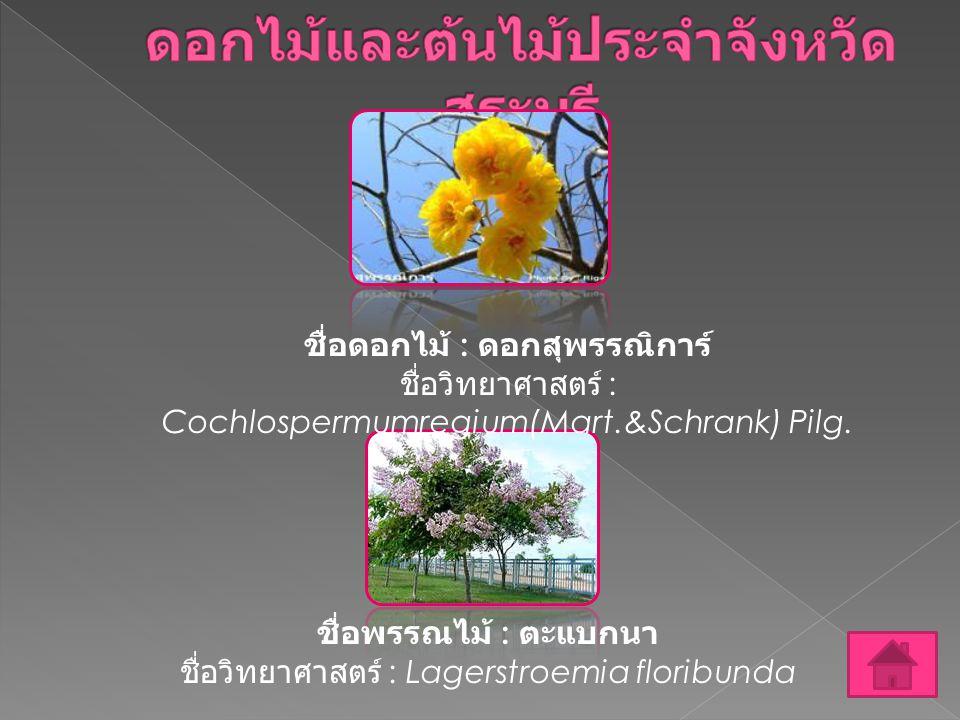 ชื่อดอกไม้ : ดอกสุพรรณิการ์ ชื่อวิทยาศาสตร์ : Cochlospermumregium(Mart.&Schrank) Pilg. ชื่อพรรณไม้ : ตะแบกนา ชื่อวิทยาศาสตร์ : Lagerstroemia floribund