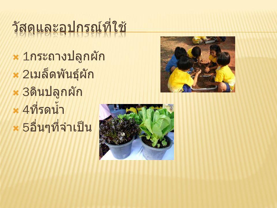  1 กระถางปลูกผัก  2 เมล็ดพันธุ์ผัก  3 ดินปลูกผัก  4 ที่รดน้ำ  5 อื่นๆทึ่จำเป็น