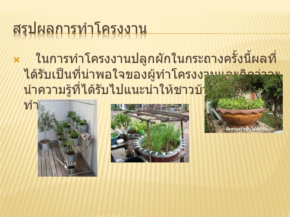  1 ใบความรู้เรื่องการปลูกพืชผัก  2  3  4