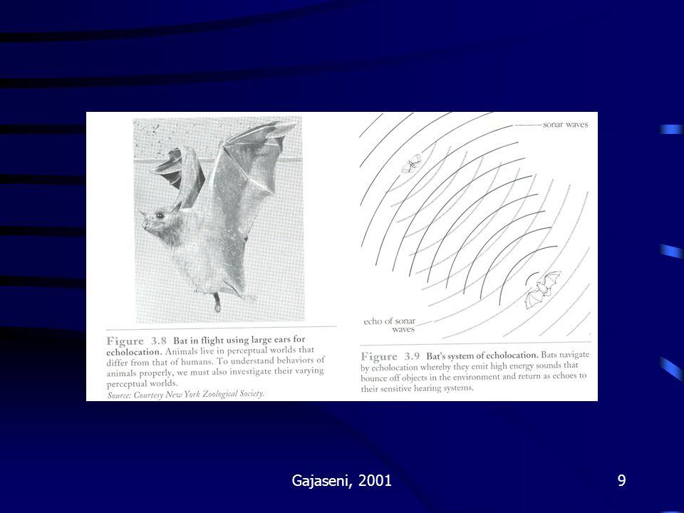 Gajaseni, 20019 รูปค้างคาว