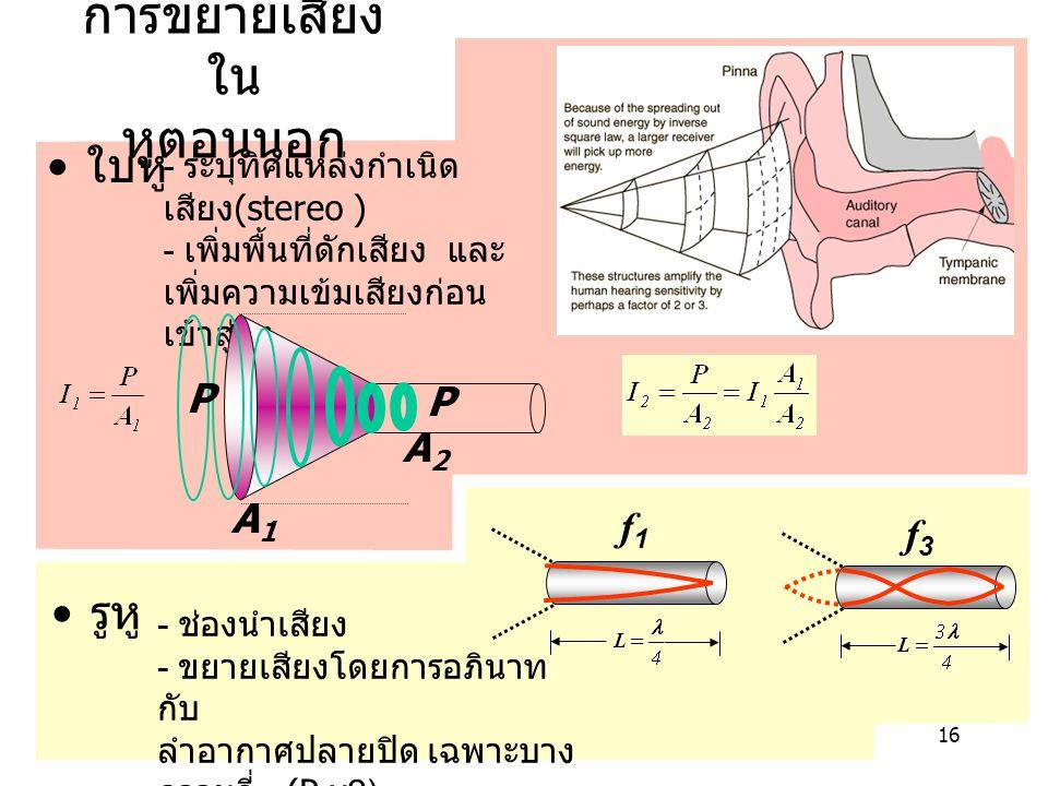16 การขยายเสียง ใน หูตอนนอก ใบหู - ระบุทิศแหล่งกำเนิด เสียง (stereo ) - เพิ่มพื้นที่ดักเสียง และ เพิ่มความเข้มเสียงก่อน เข้าสู่รูหู รูหู A1A1 A2A2 P P