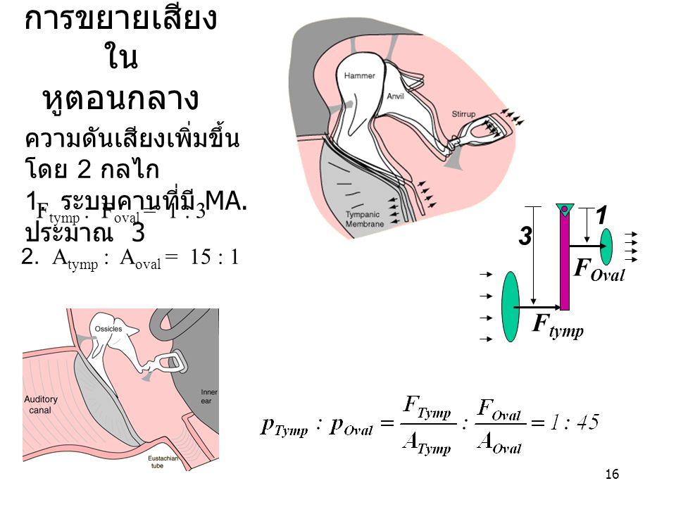 16 การขยายเสียง ใน หูตอนกลาง ความดันเสียงเพิ่มขึ้น โดย 2 กลไก 1. ระบบคานที่มี MA. ประมาณ 3 2. A tymp : A oval = 15 : 1 F tymp F Oval 3 1 F tymp : F ov