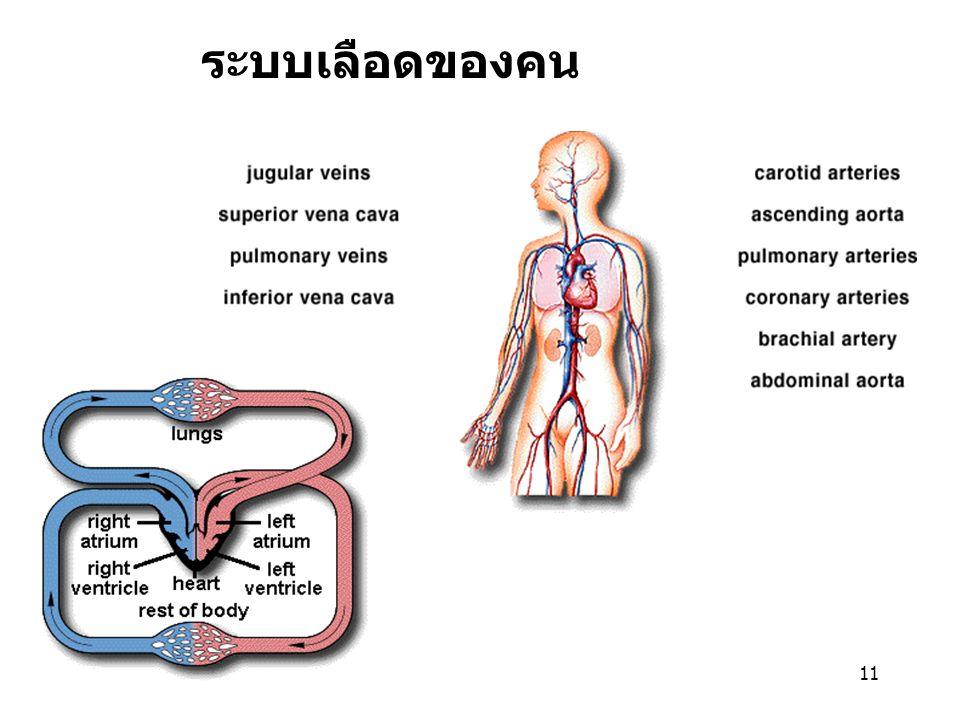 11 ระบบเลือดของคน