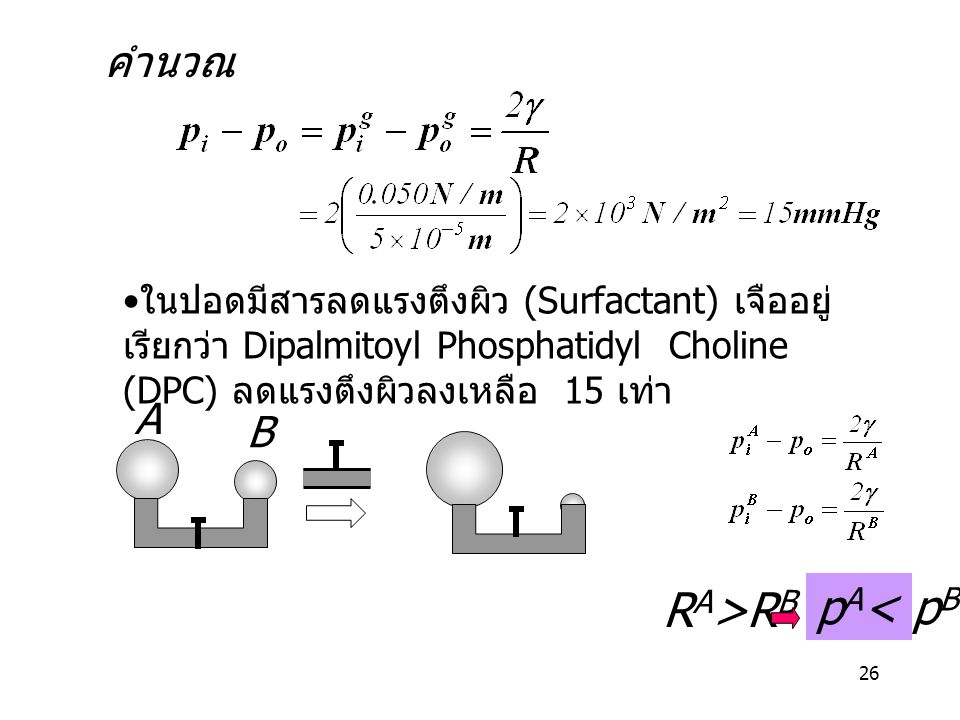 26 ในปอดมีสารลดแรงตึงผิว (Surfactant) เจืออยู่ เรียกว่า Dipalmitoyl Phosphatidyl Choline (DPC) ลดแรงตึงผิวลงเหลือ 15 เท่า คำนวณ ? R A >R B A B p A < p