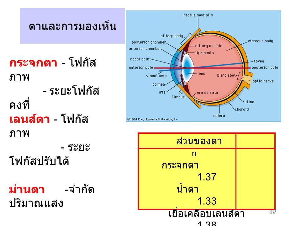 10 ตาและการมองเห็น ส่วนของตา n กระจกตา 1.37 น้ำตา 1.33 เยื่อเคลือบเลนส์ตา 1.38 เลนส์ตา 1.41 ของเหลวในกระบอกตา 1.33 กระจกตา - โฟกัส ภาพ - ระยะโฟกัส คงท