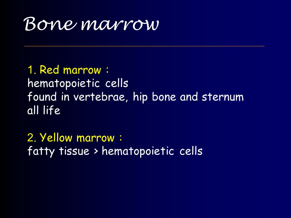 Bone marrow 1. Red marrow : hematopoietic cells found in vertebrae, hip bone and sternum all life 2. Yellow marrow : fatty tissue > hematopoietic cell