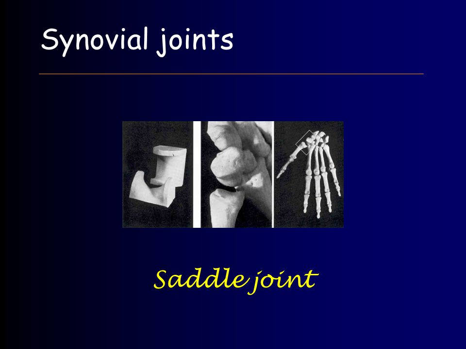 Synovial joints Saddle joint