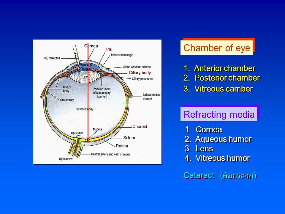Chamber of eye 1. Anterior chamber 2. Posterior chamber 3. Vitreous camber 1. Anterior chamber 2. Posterior chamber 3. Vitreous camber Refracting medi