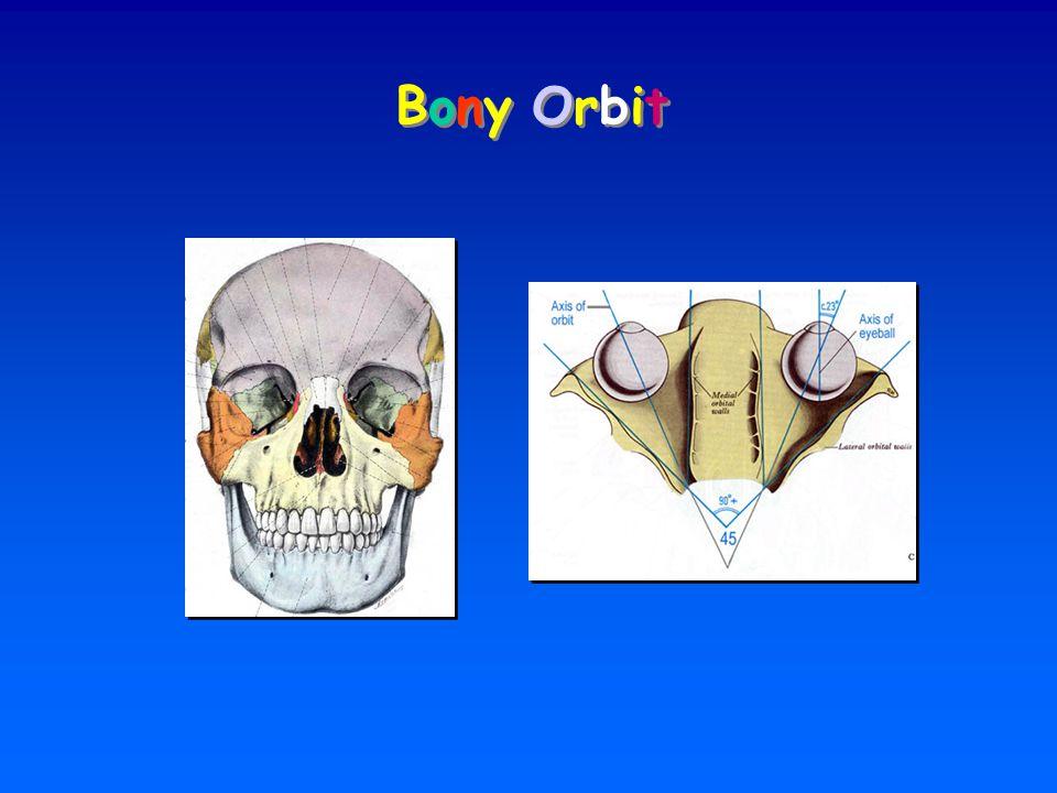 Bony Orbit