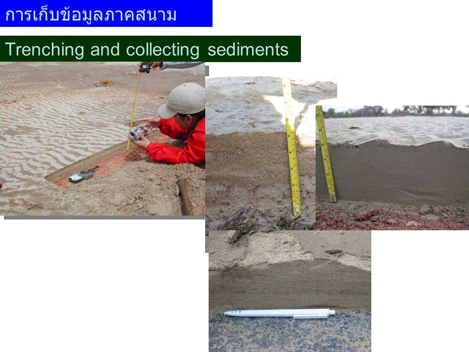 การเก็บข้อมูลภาคสนาม Trenching and collecting sediments