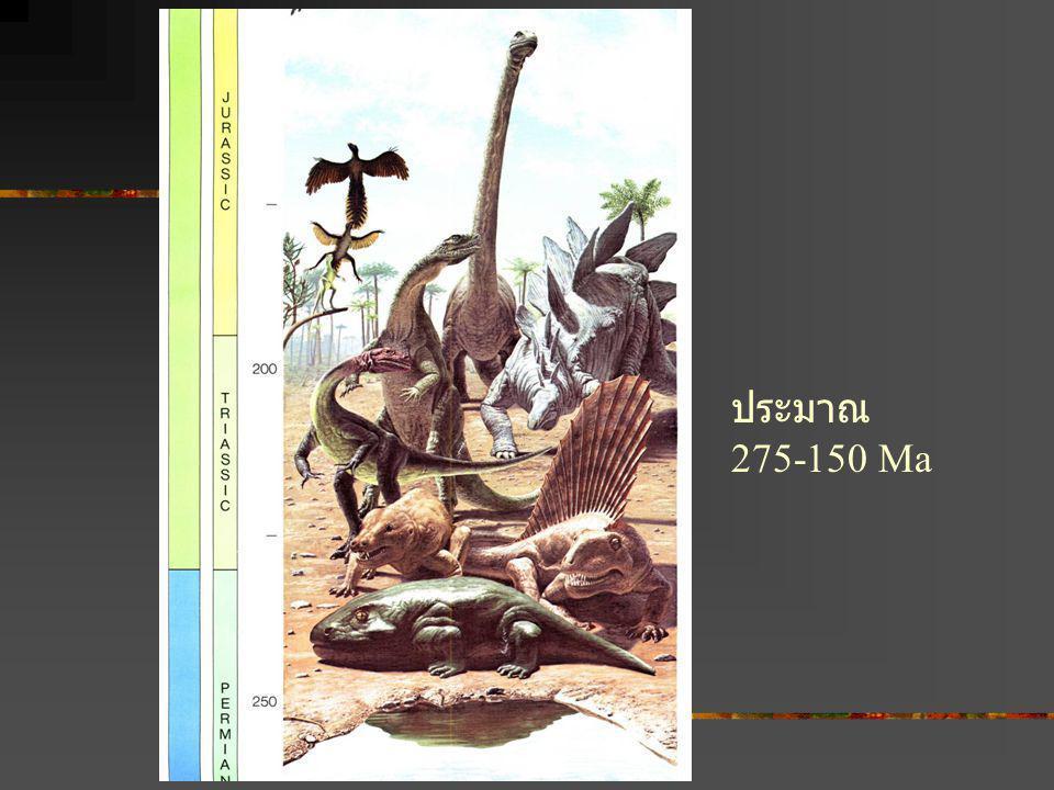 ประมาณ 275-150 Ma