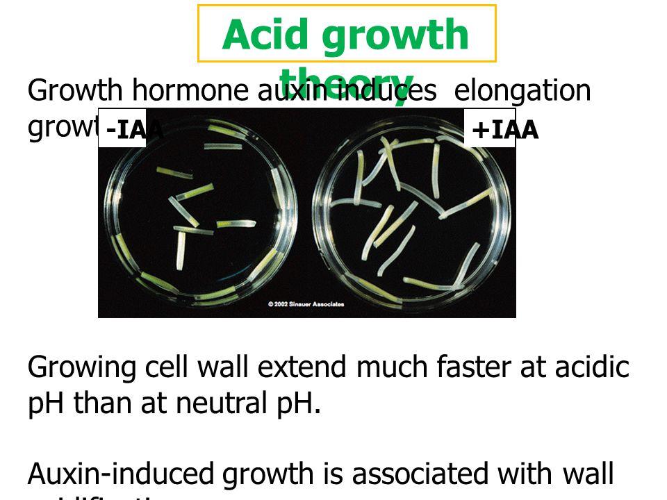 Acid growth theory Hager A. et al. 1991 Planta 185: 527-537