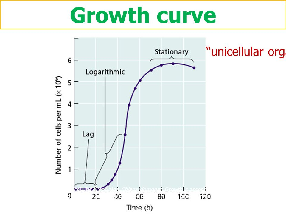Growth curve Figure 1 Growth of the unicellular green alga Chlamydomonas. Growth is assessed by a count of the number of cells per milliliter at incre