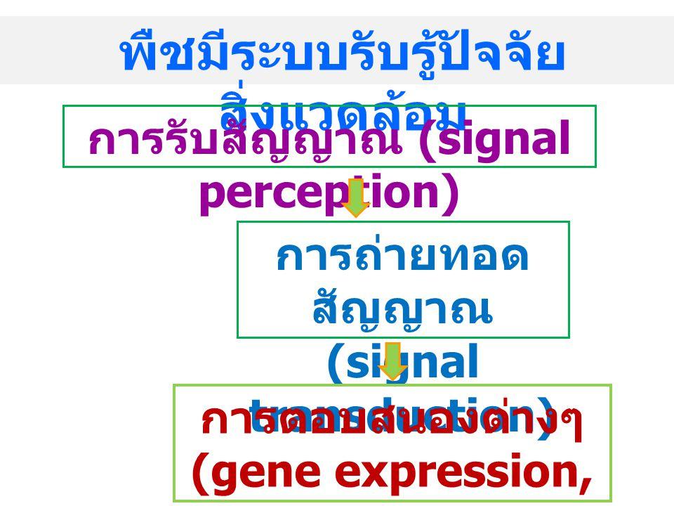 พืชมีระบบรับรู้ปัจจัย สิ่งแวดล้อม การรับสัญญาณ (signal perception) การถ่ายทอด สัญญาณ (signal transduction) การตอบสนองต่างๆ (gene expression, responses