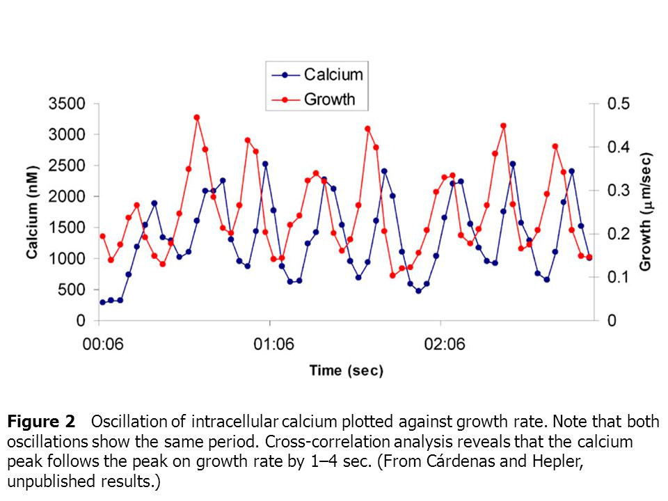 Figure 2 Oscillation of intracellular calcium plotted against growth rate.