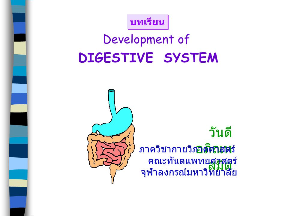 : 4 wks 5 wks Liver, gall bladder, biliary duct system 4 weeks Hepatic diverticulum อยู่หน้าต่อ caudal part ของ foregut ยื่นเข้าไปใน septum transversum ซึ่งเป็นส่วนของ splanchnic mesoderm และจะเจริญไปเป็น central tendon of diaphragm ventral mesentery Moore & Persaud: The Developing Human,Clinically Oriented Embryology, 6th ed)