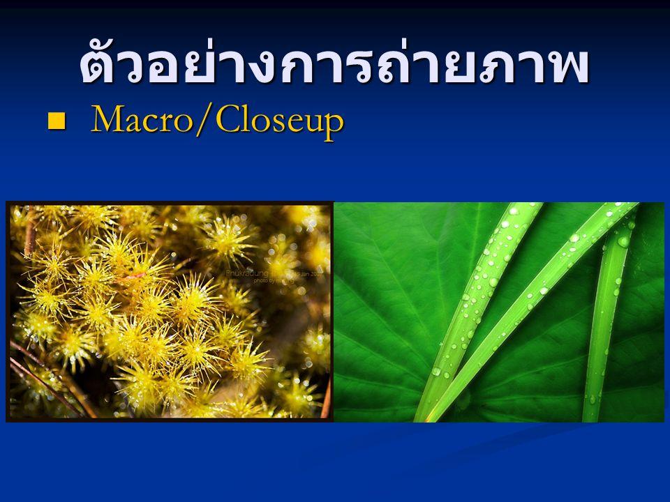 ตัวอย่างการถ่ายภาพ Macro/Closeup Macro/Closeup
