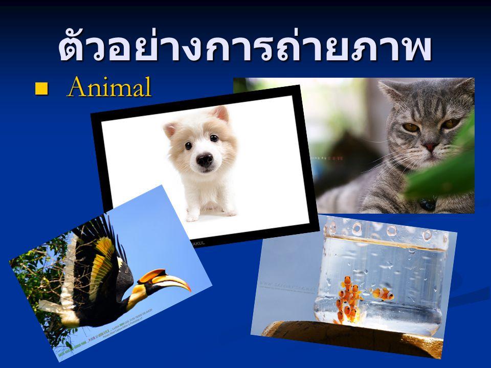 ตัวอย่างการถ่ายภาพ Animal Animal