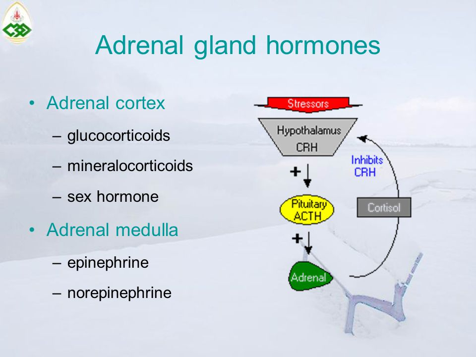 Adrenal gland hormones Adrenal cortex –glucocorticoids –mineralocorticoids –sex hormone Adrenal medulla –epinephrine –norepinephrine