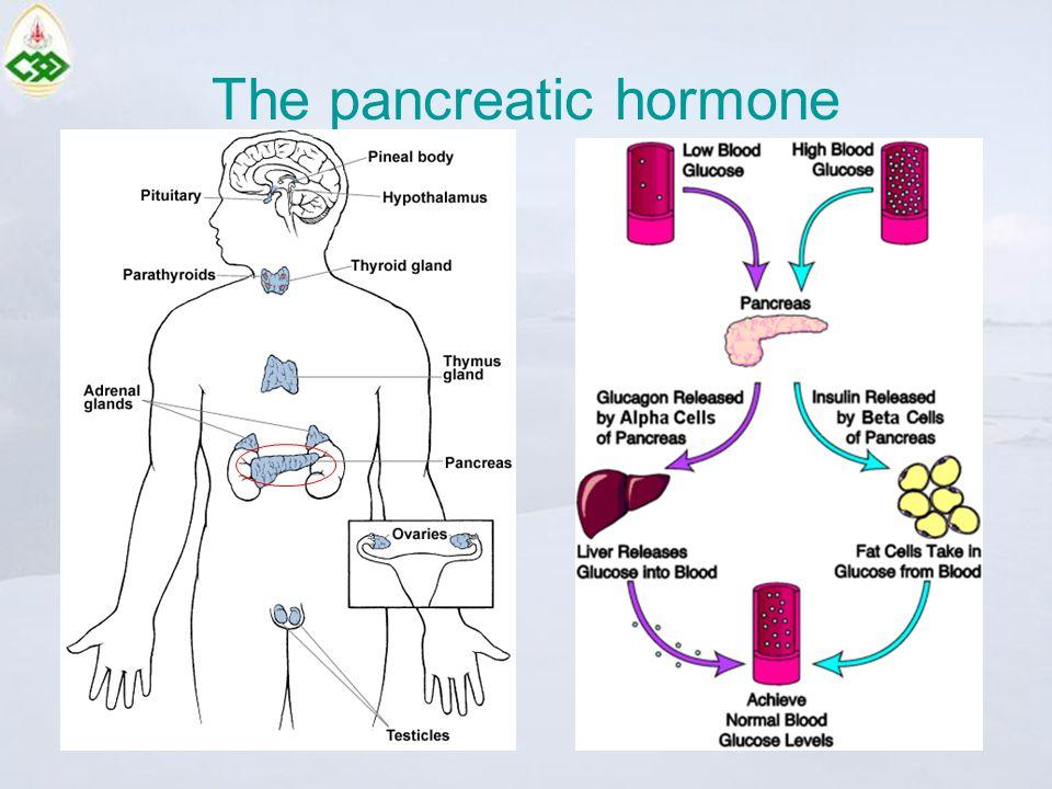 The pancreatic hormone