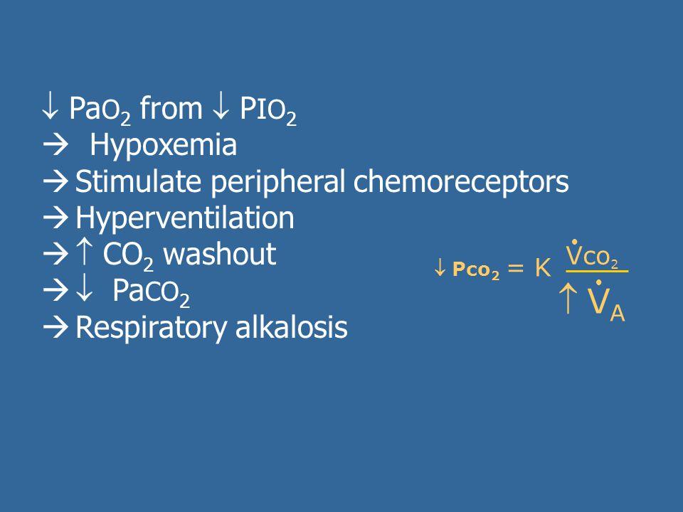  Pa O 2 from  P I O 2  Hypoxemia  Stimulate peripheral chemoreceptors  Hyperventilation   CO 2 washout   Pa CO 2  Respiratory alkalosis  Pco 2 = K Vco 2   VA VA 