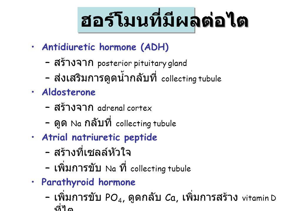 Antidiuretic hormone (ADH) – สร้างจาก posterior pituitary gland – ส่งเสริมการดูดน้ำกลับที่ collecting tubule Aldosterone – สร้างจาก adrenal cortex – ด