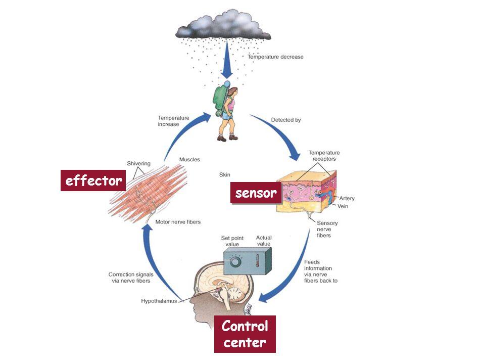 sensor Control center effector