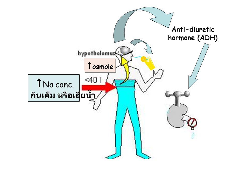 Anti-diuretic hormone (ADH)  Na conc. กินเค็ม หรือเสียน้ำ  osmole