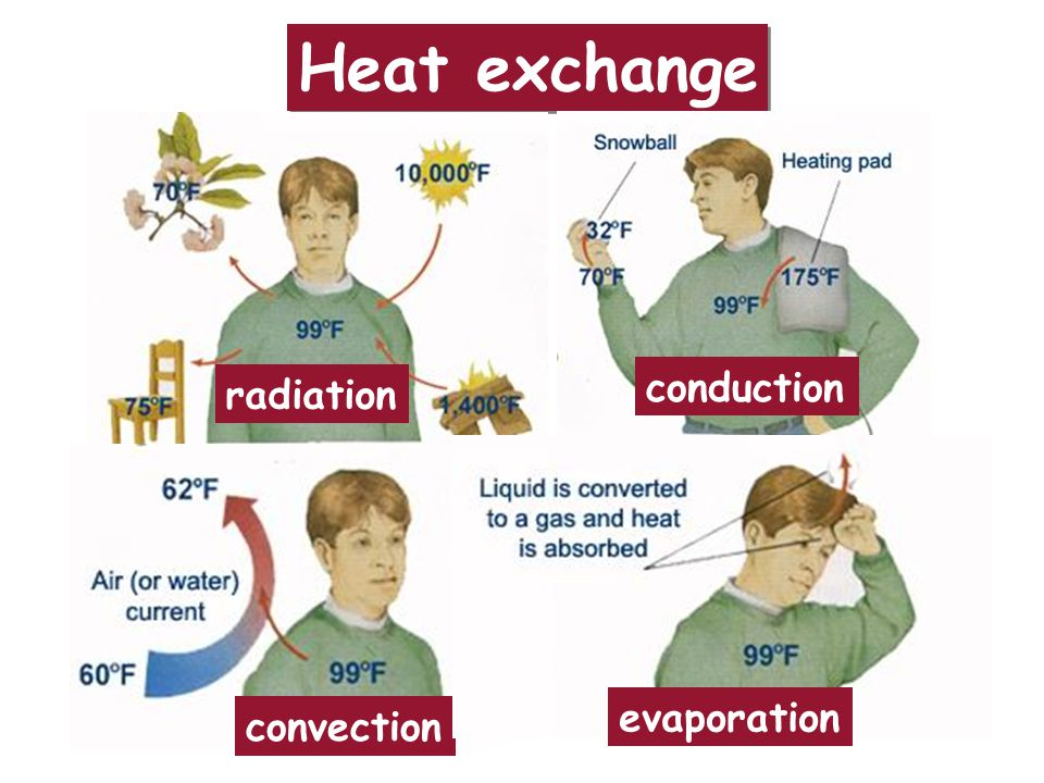 Heat exchange radiation conduction convection evaporation